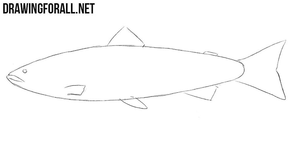 learn to draw a salmon step by step