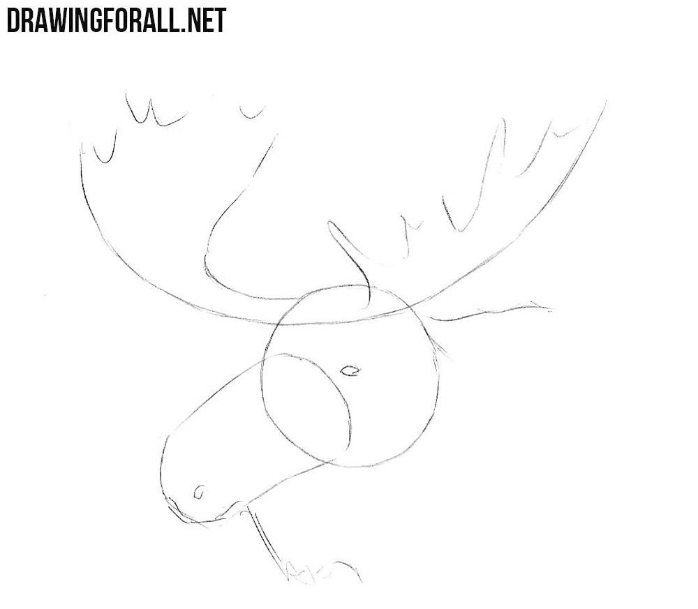 learn to draw an Elk Head