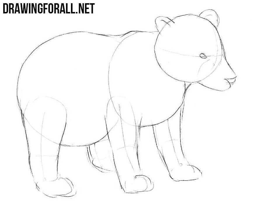Learn how to draw a little Bear