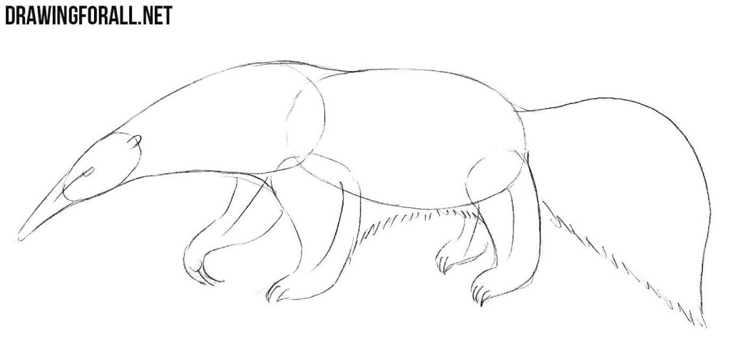 anteater drawing tutorial