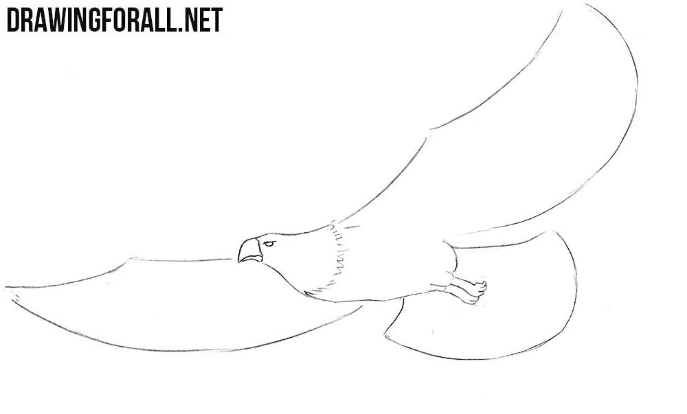 bald eagle head drawing