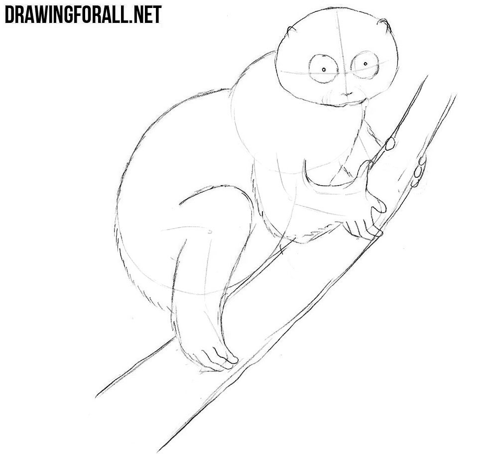 how to draw a Slow Loris with a pencil