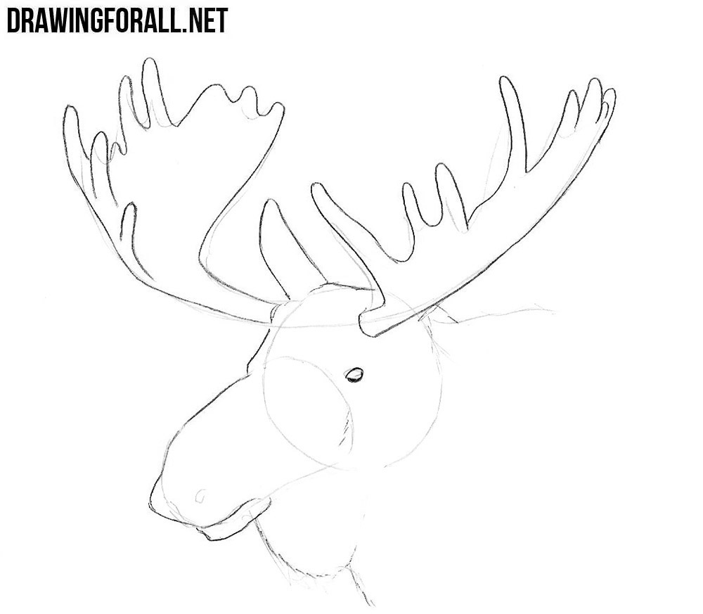 how to draw an Elk Head step by step