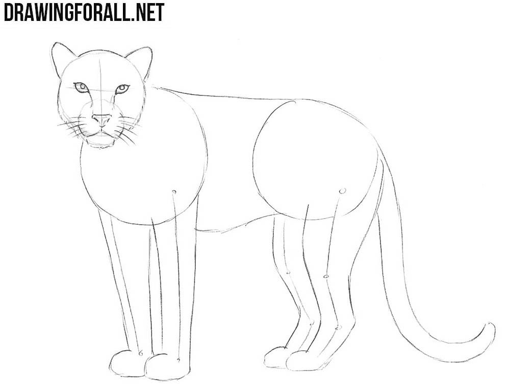 learn to draw a leopard  step by step