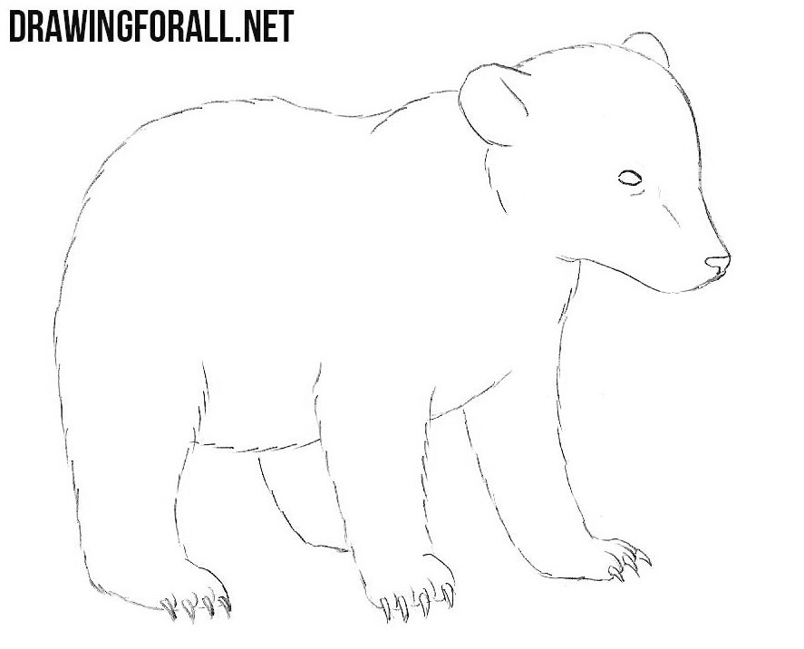 Baby Bear drawing