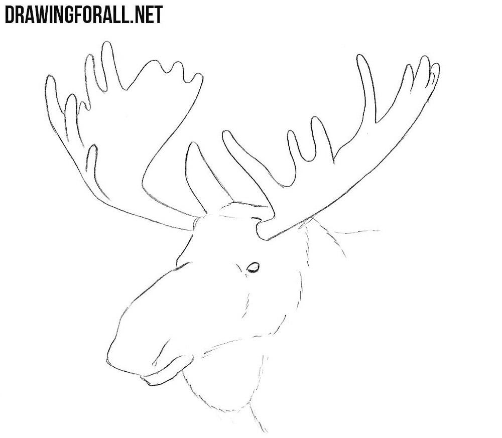 Elk Head drawing