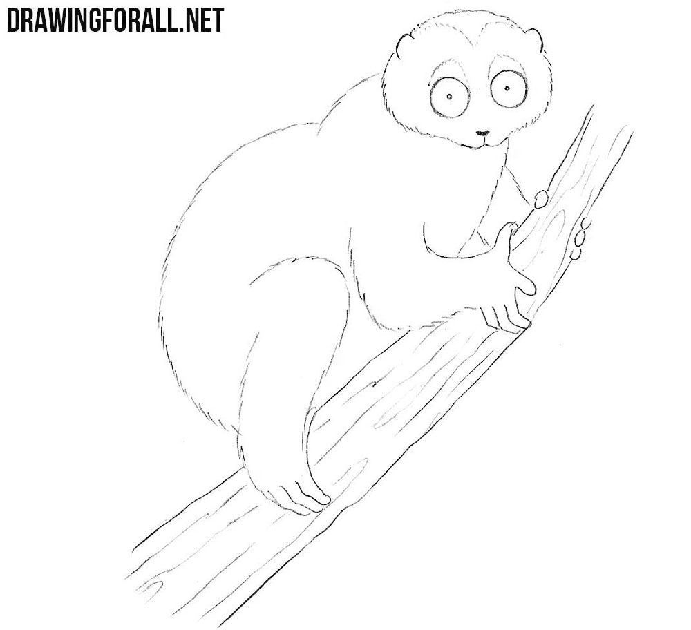 Slow Loris drawing