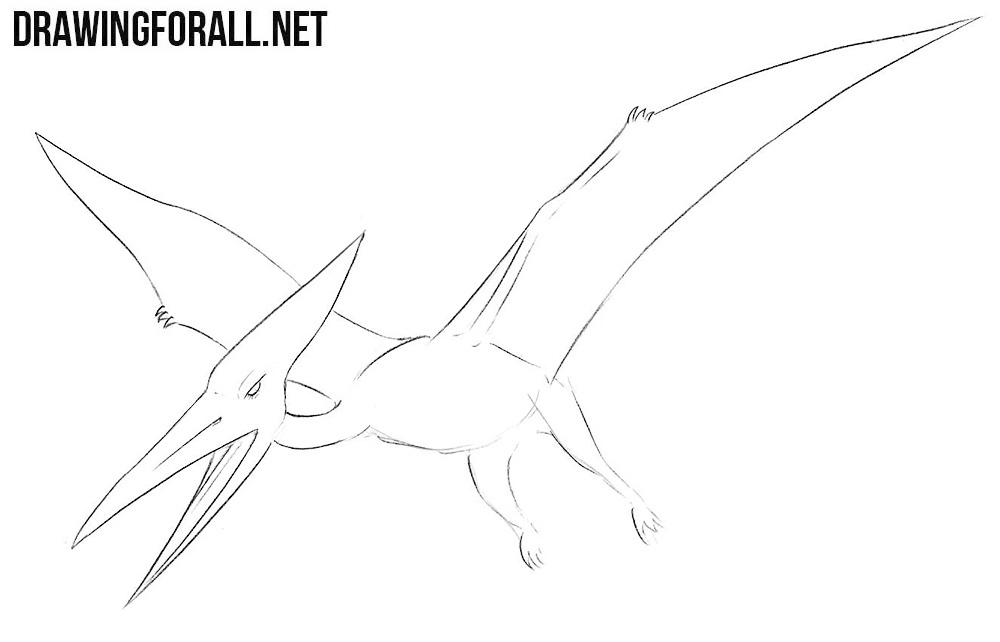 how to draw a Pterodactylus step by step