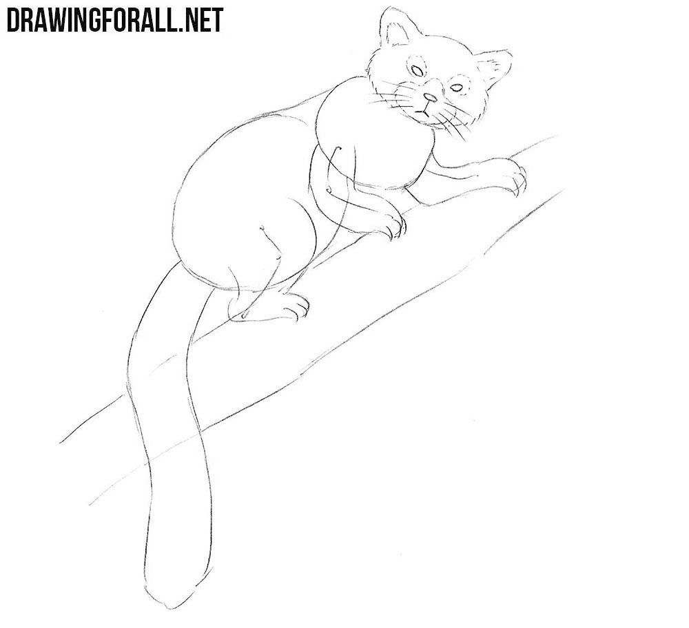 learn how to draw a Red Panda step by step