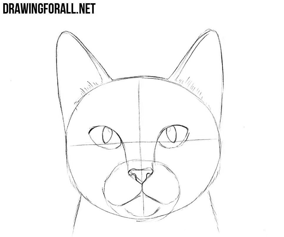 How to Draw a Cat Head | Drawingforall.net