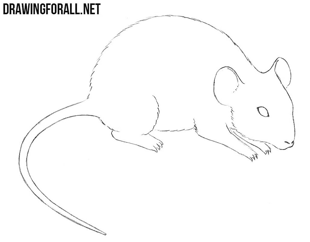 mouse drawing