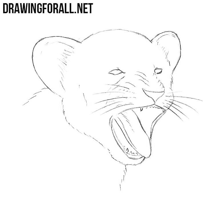 yawning lion cub drawing