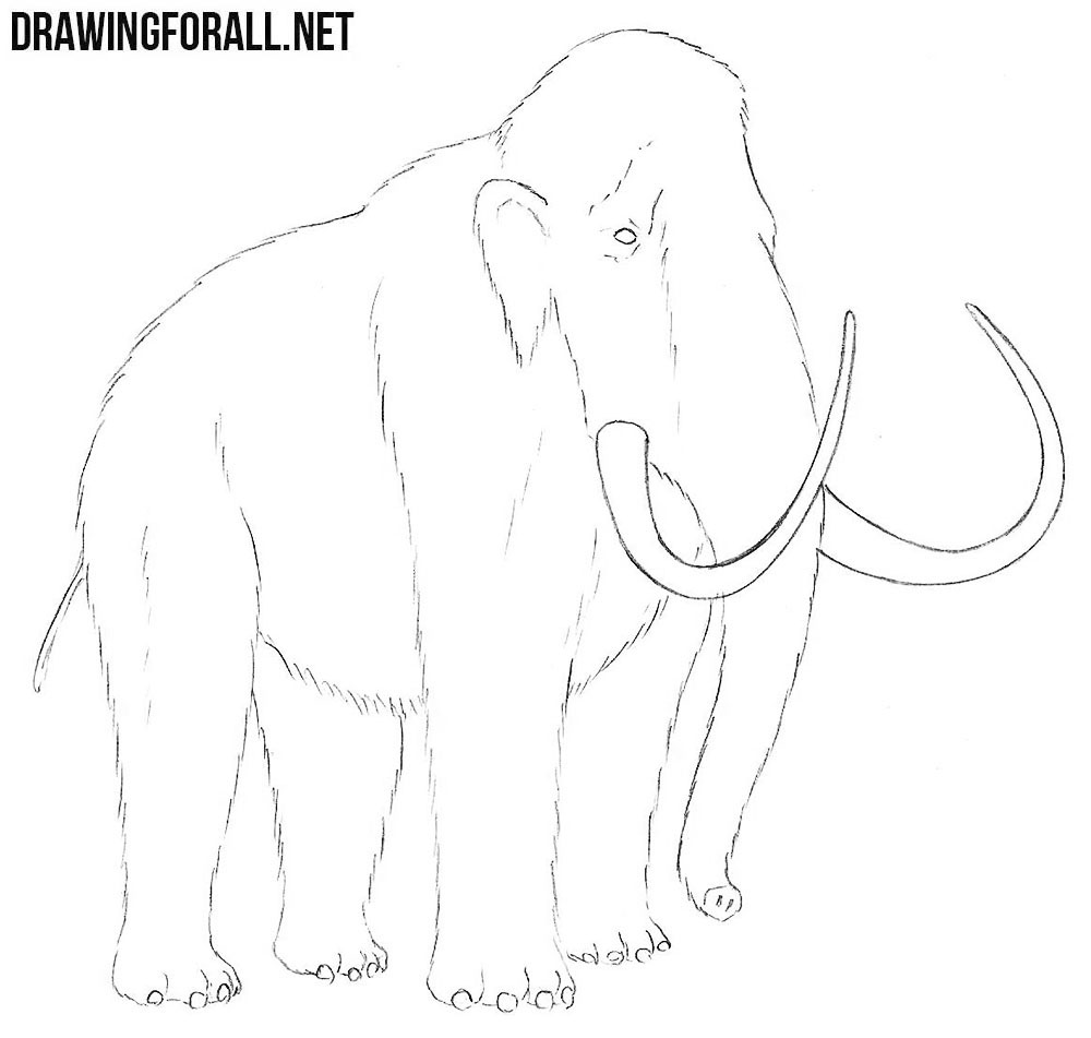 Mammoth drawing