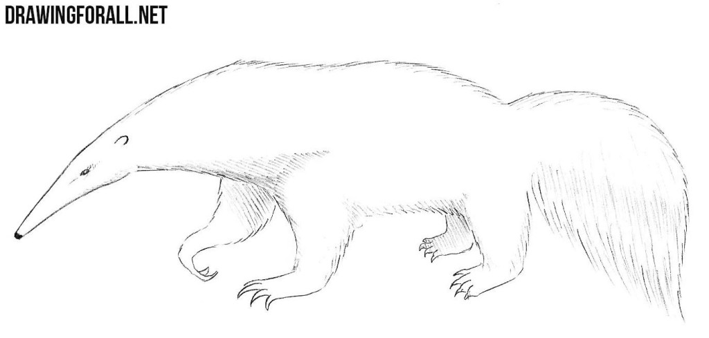 how to draw a anteater