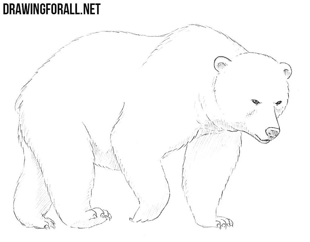 How to Draw a Bear | Drawingforall.net