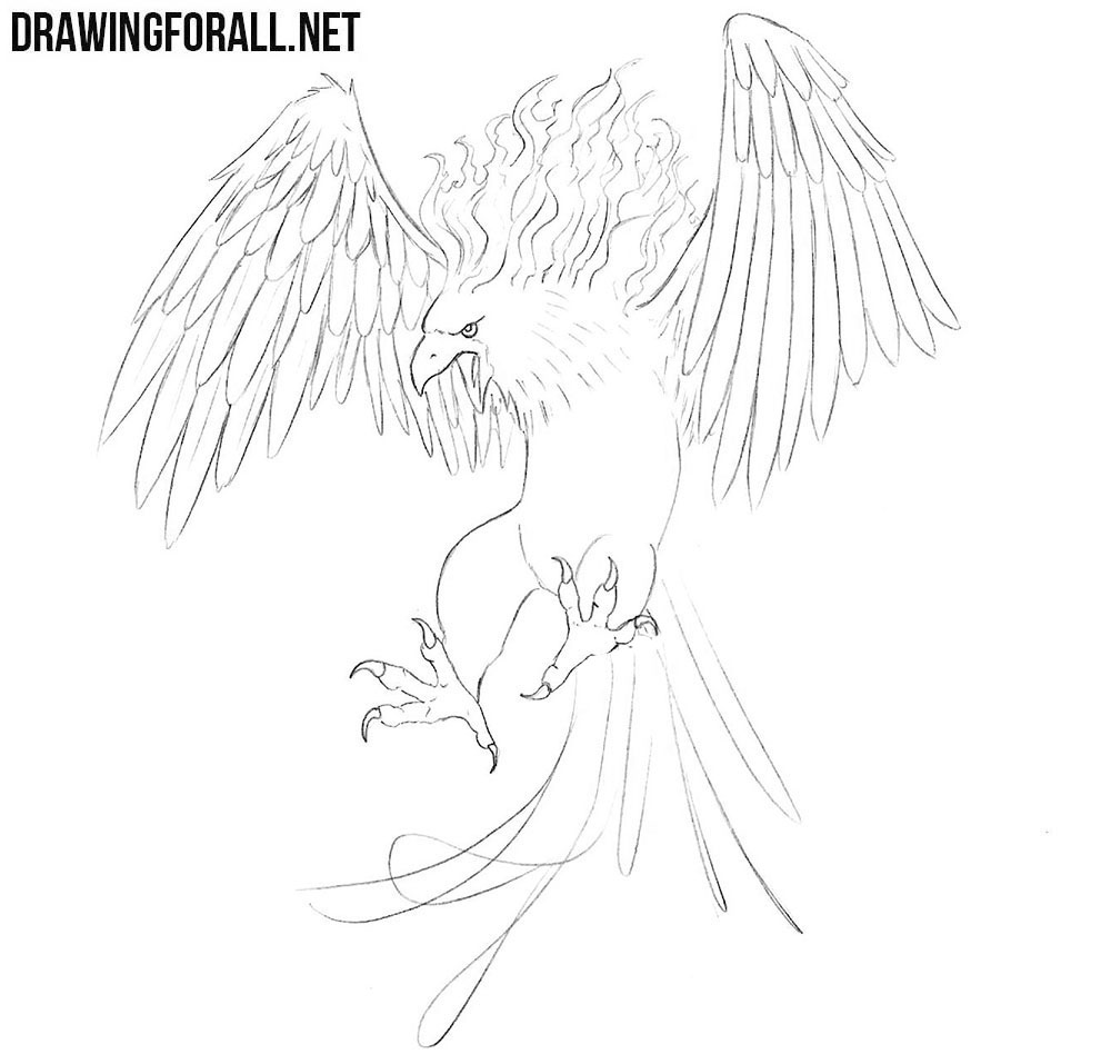 learn to draw a Phoenix from myths