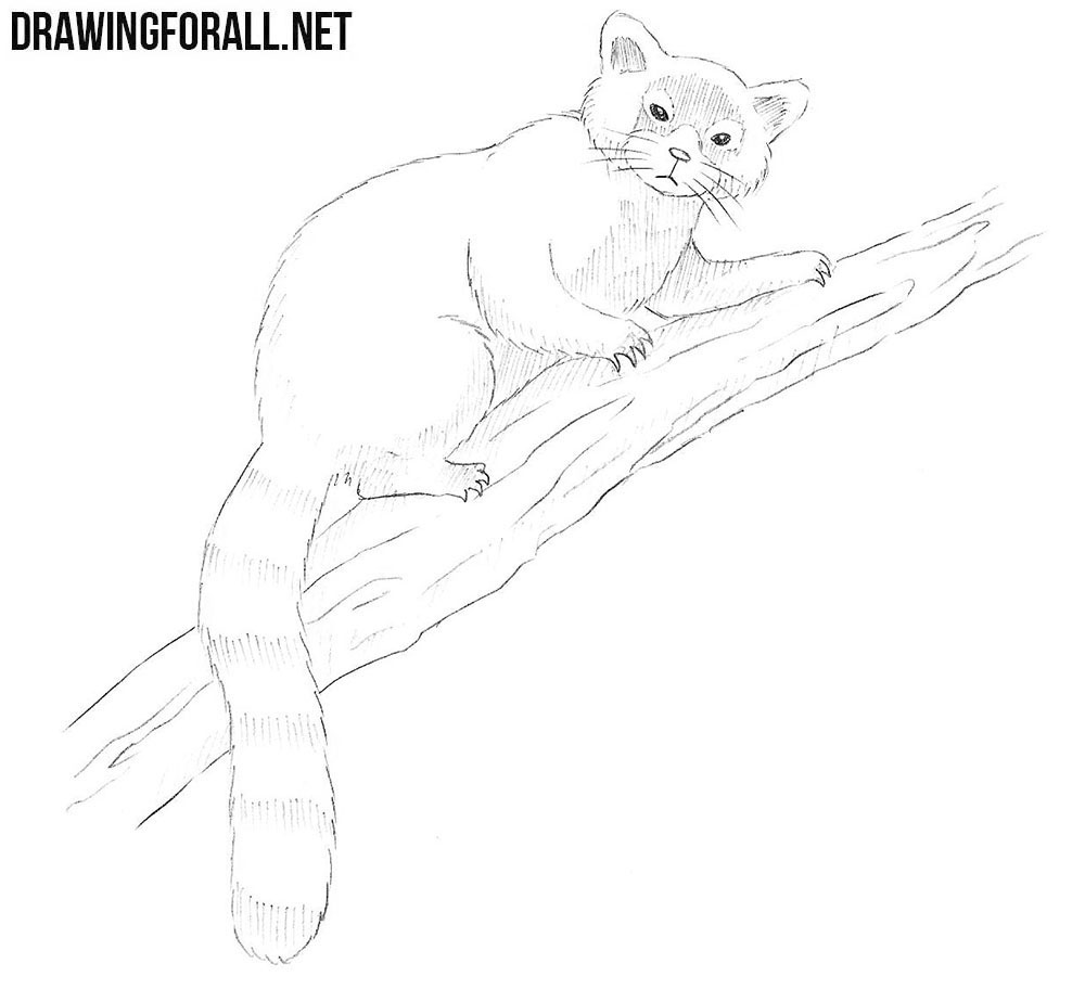 how to draw a Red Panda