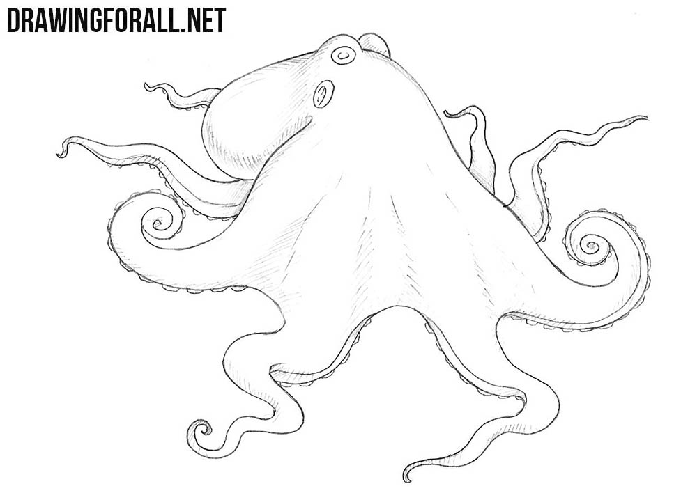 Octopus drawings for Octopus drawing easy