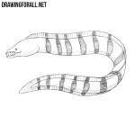 How to Draw a Muraena