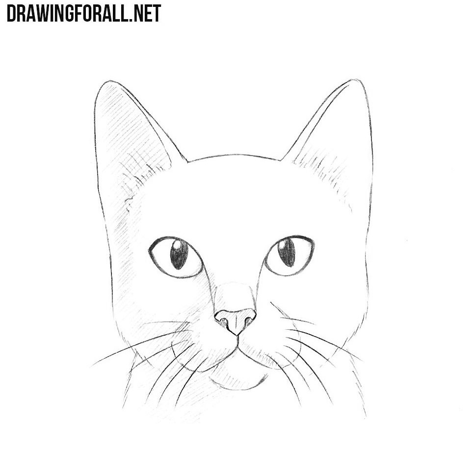 Line Drawing Of A Cat Face : How to draw a cat head drawingforall