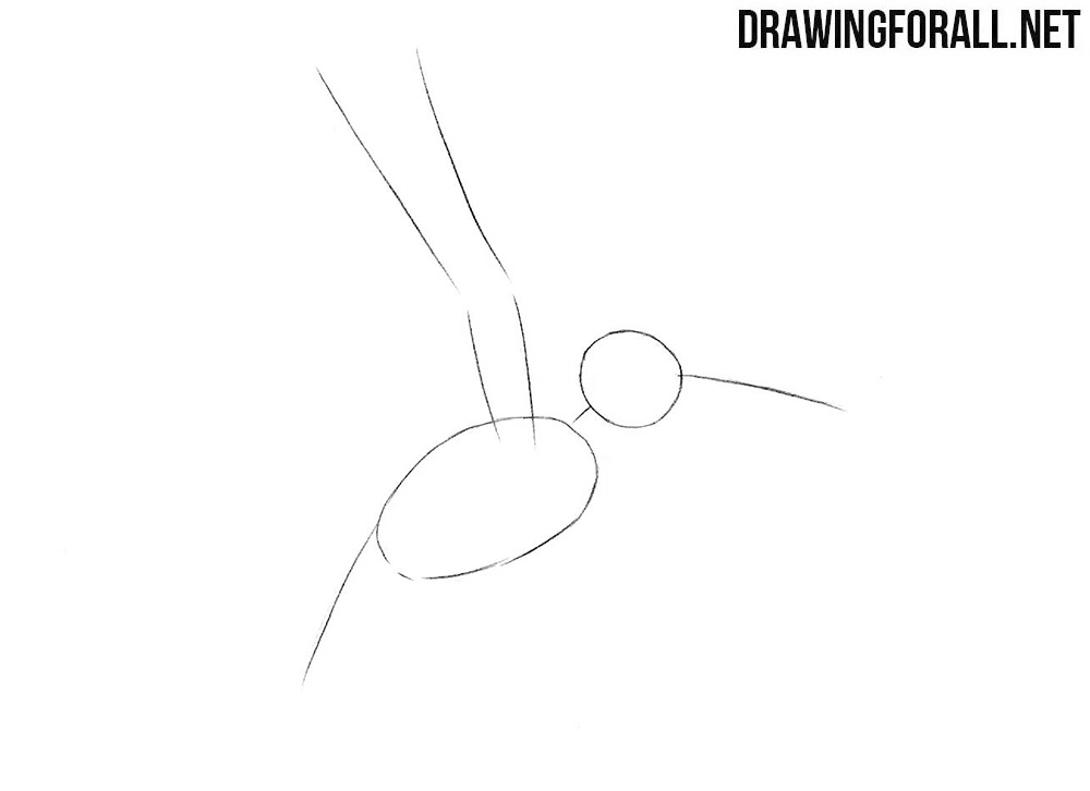 How to draw a humming bird