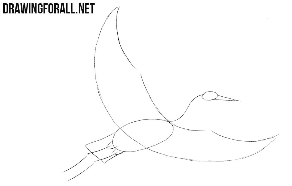 How to sketch a crane bird