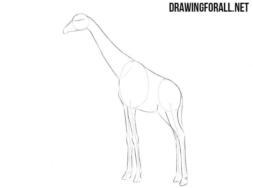 How to sketch a giraffe