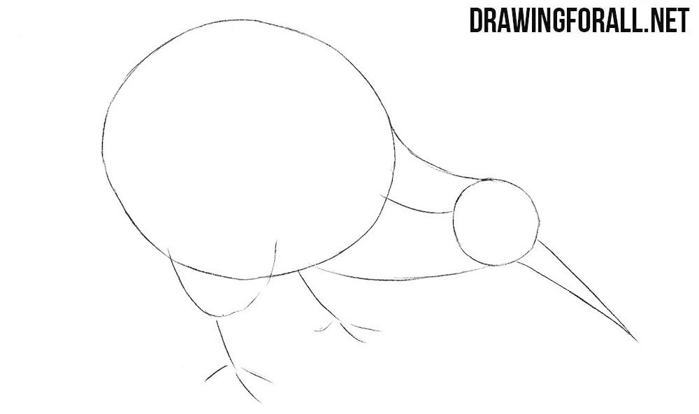 Learb to draw a kiwi bird step by step