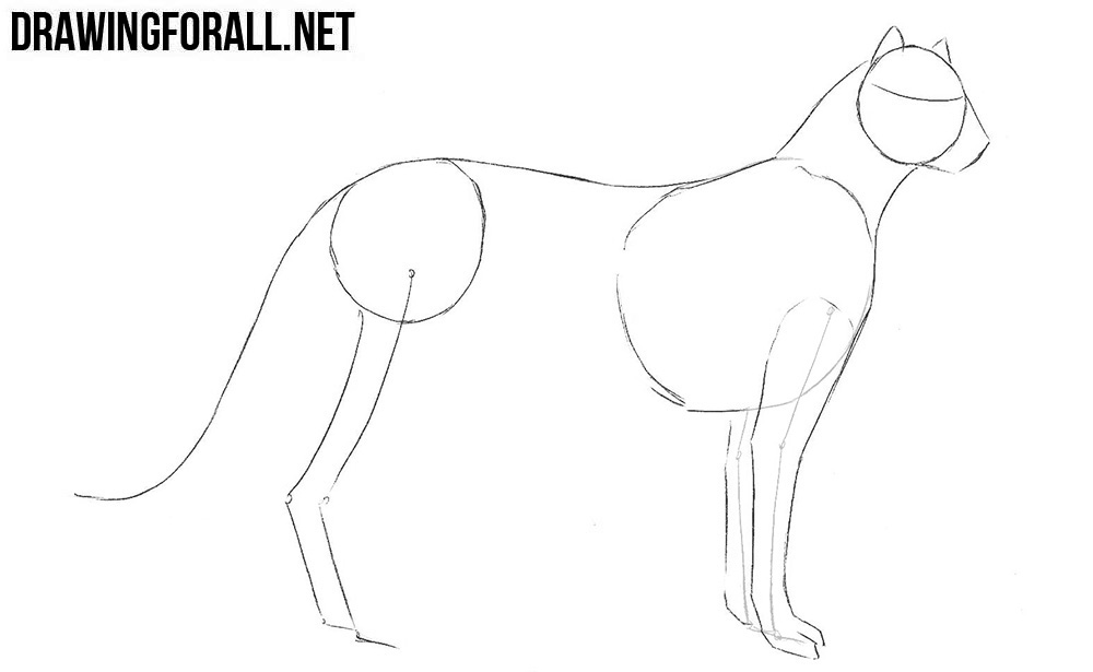 Learn how to draw a cheetah