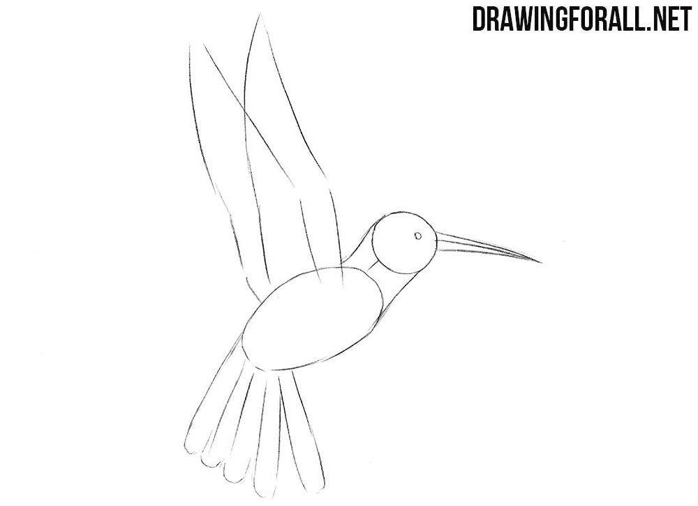Learn to draw a humming bird