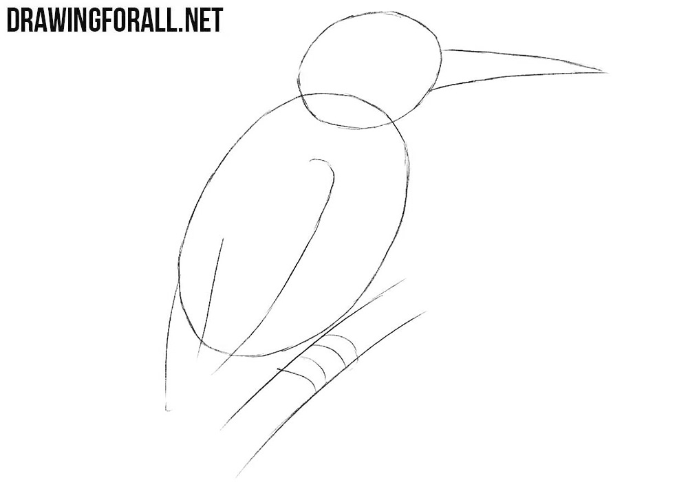 Learn to draw a kingfisher