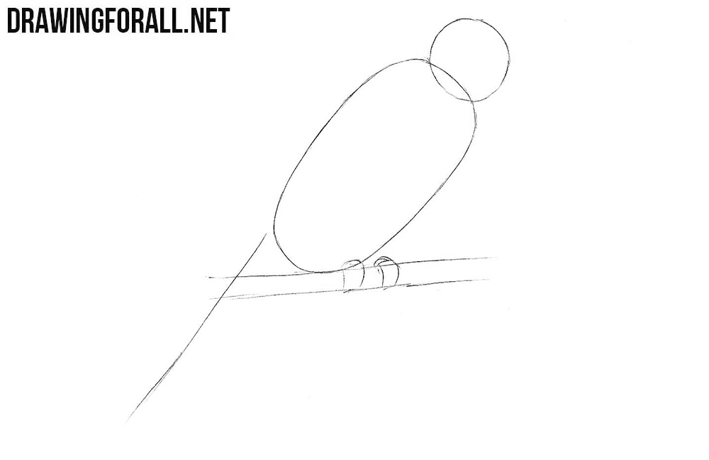 Learn to draw a parrot