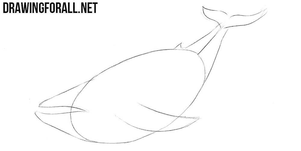 Learn to draw a whale step by step