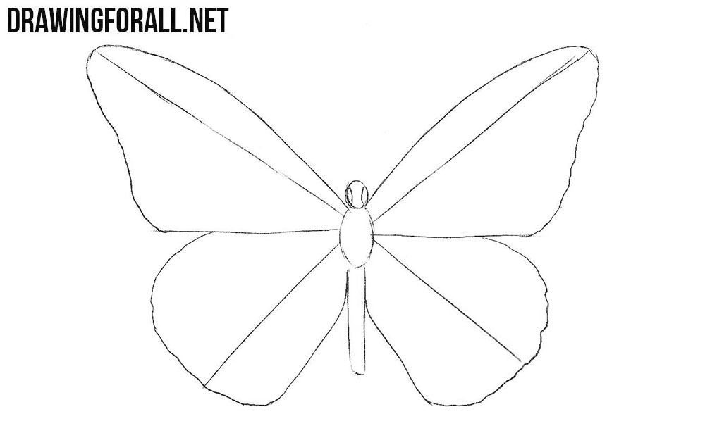 learn how to draw a butterfly