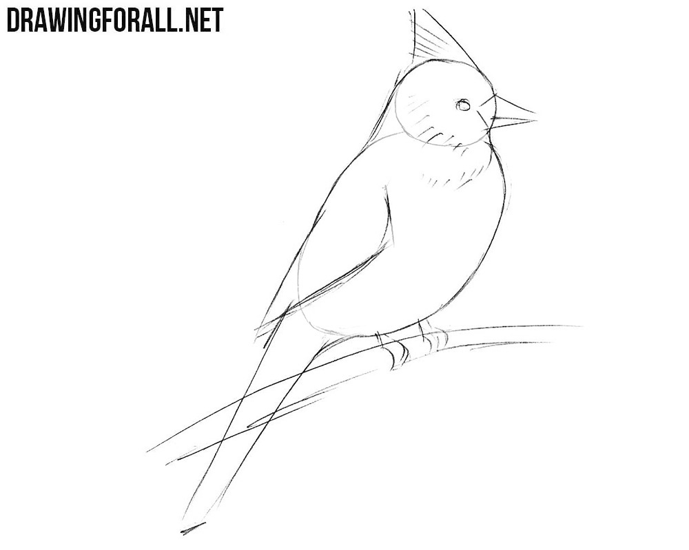 Draw a northern cardinal step by step