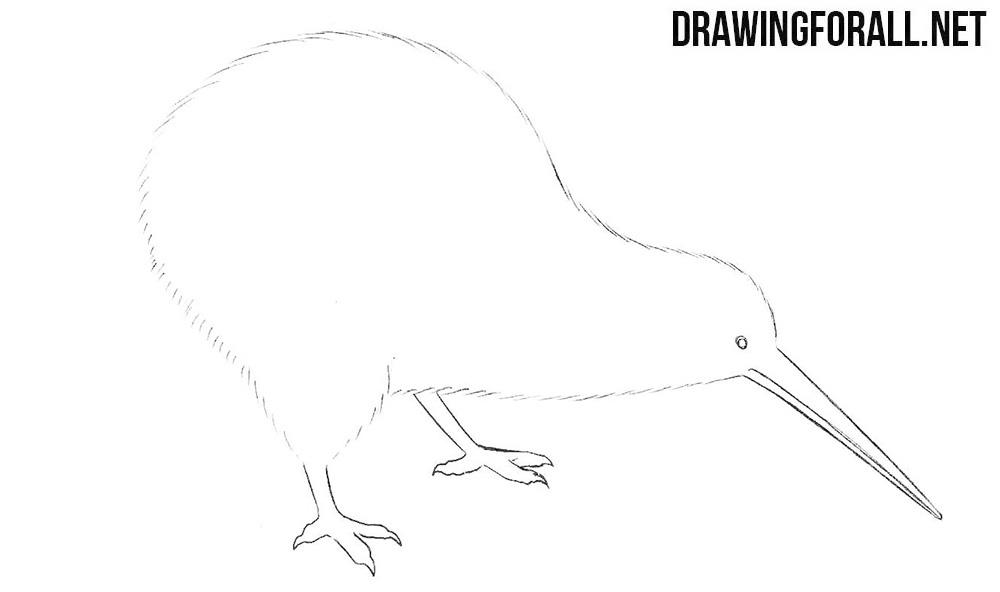 How to draw a kiwi bird step by step