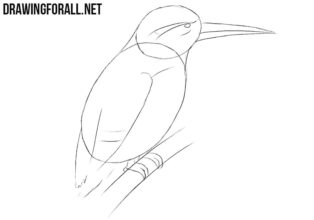 How to sketch a kingfisher step by step