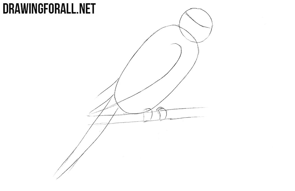 How to sketch a parrot