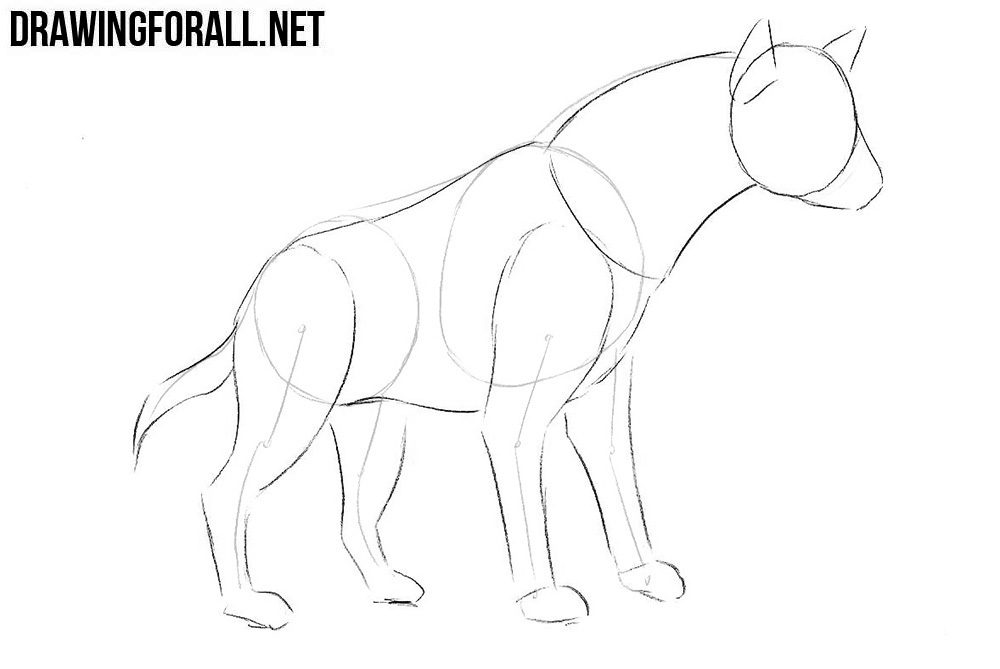 Learn how to draw a hyena step by step
