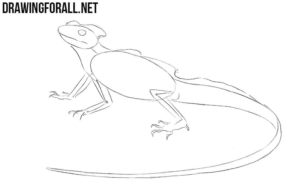 Learn to draw a Basilisk Lizard step by step
