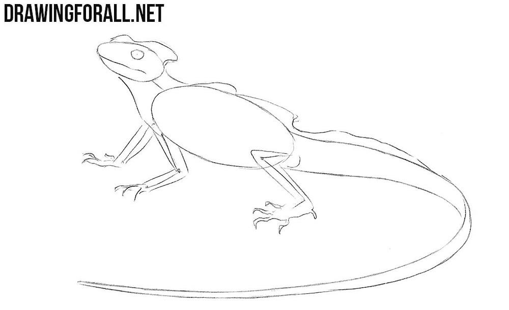 Learn to draw a Basilisk Lizard step by step