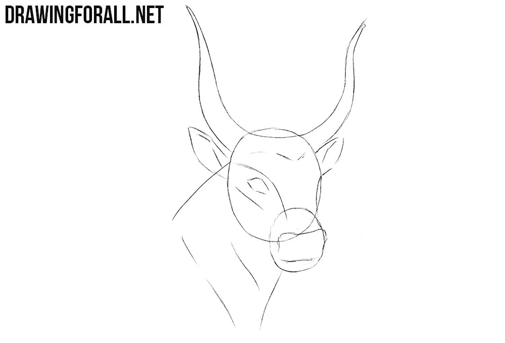 Learn to draw a bull head step by step