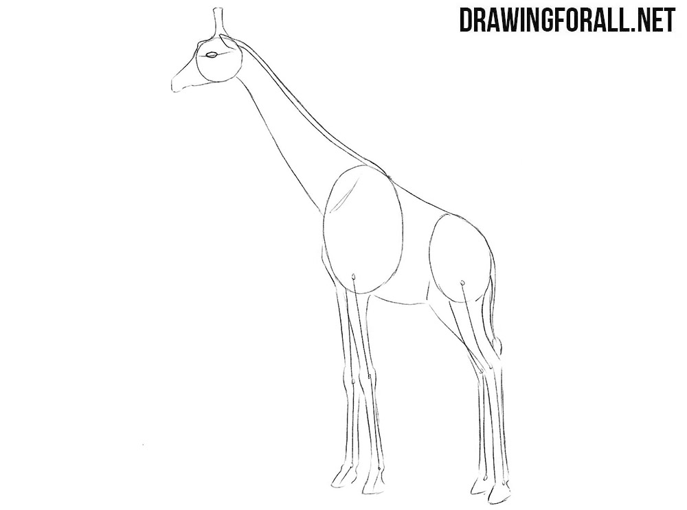 Learn to draw a giraffe