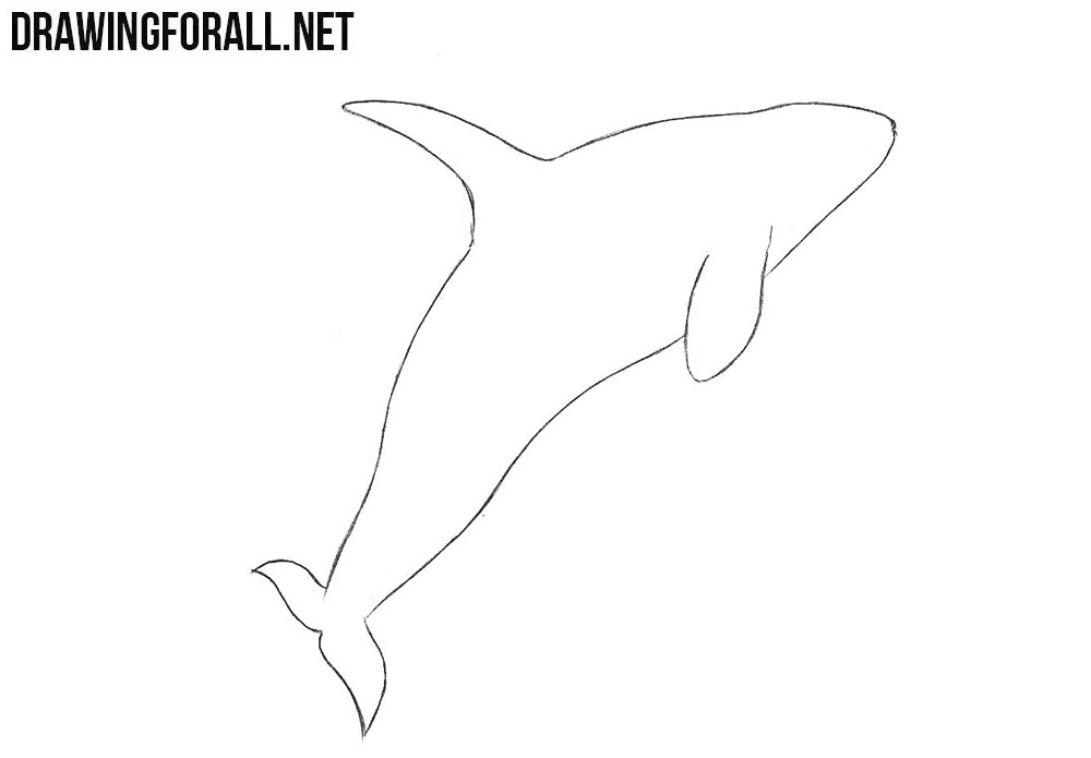 Learn to draw a killer whale step by step