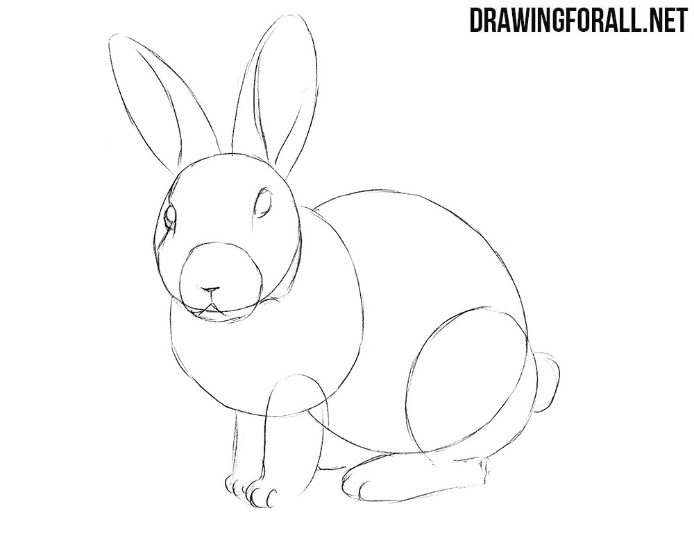 Learn to draw a rabbit easy