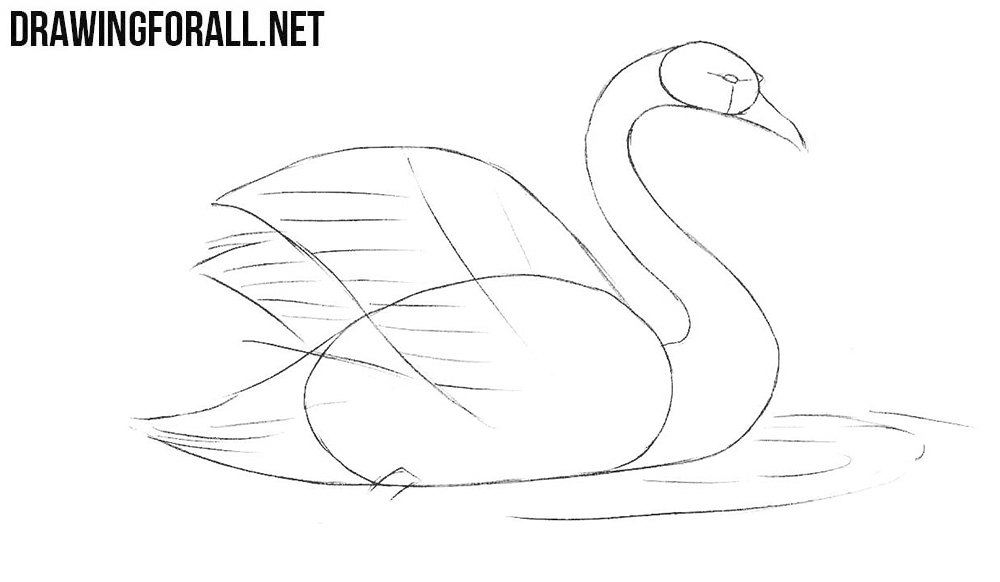 Learn to draw a swan