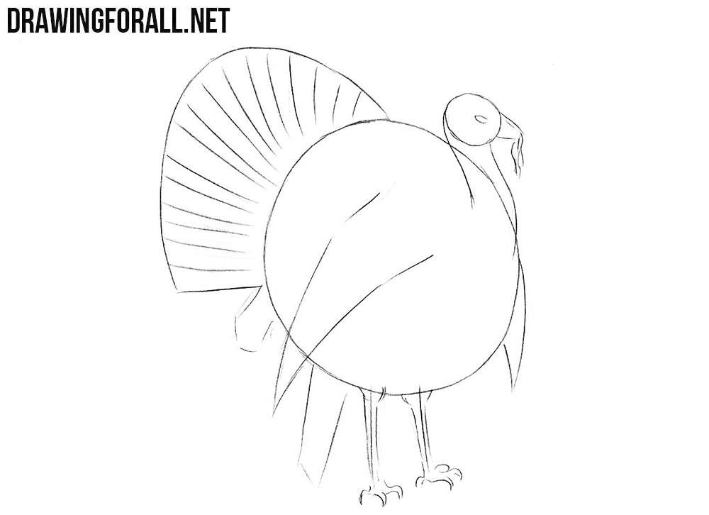 Learn to draw a turkey step by step