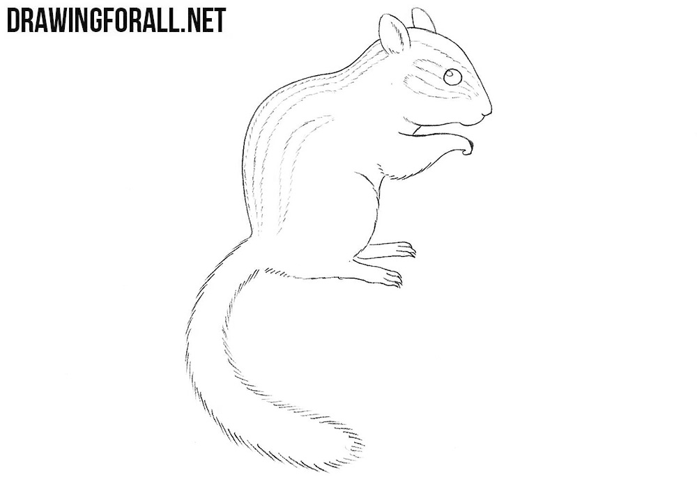 Chipmunk drawing tutorial