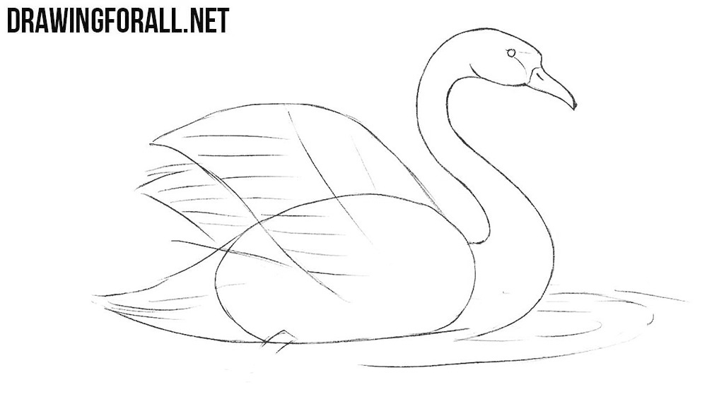 How to draw a swimming swan