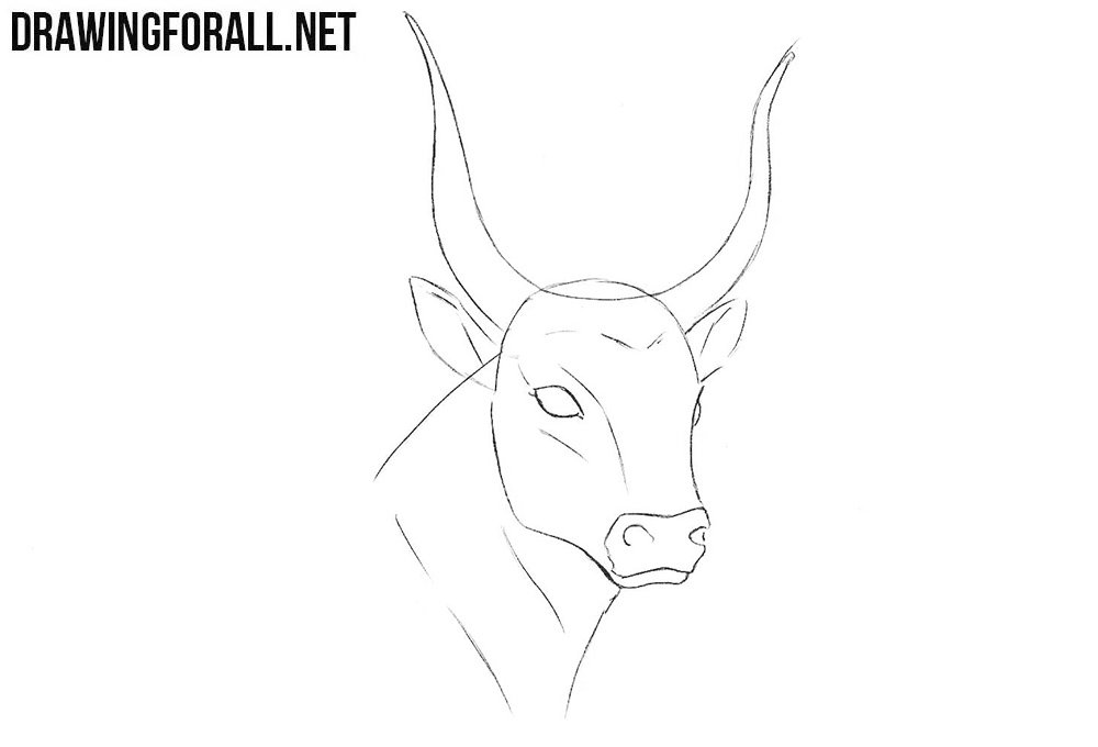 How to sketch a bull head step by step